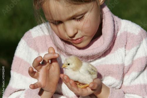 Fotografie, Obraz  petite fille avec un poussin dans les mains