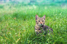 Cat Sitting In The Grass On Th...
