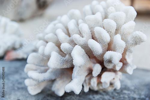 hard stony coral Canvas Print