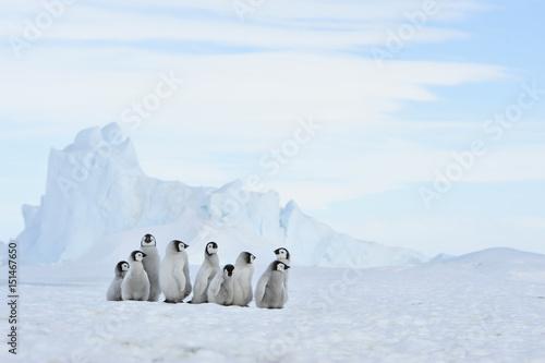 Autocollant pour porte Antarctique Emperor Penguin chicks in Antarctica