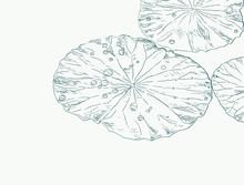 Water Drops On Lotus Leaf , Sketch Vector.