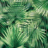 Palm leaves background - 151508045