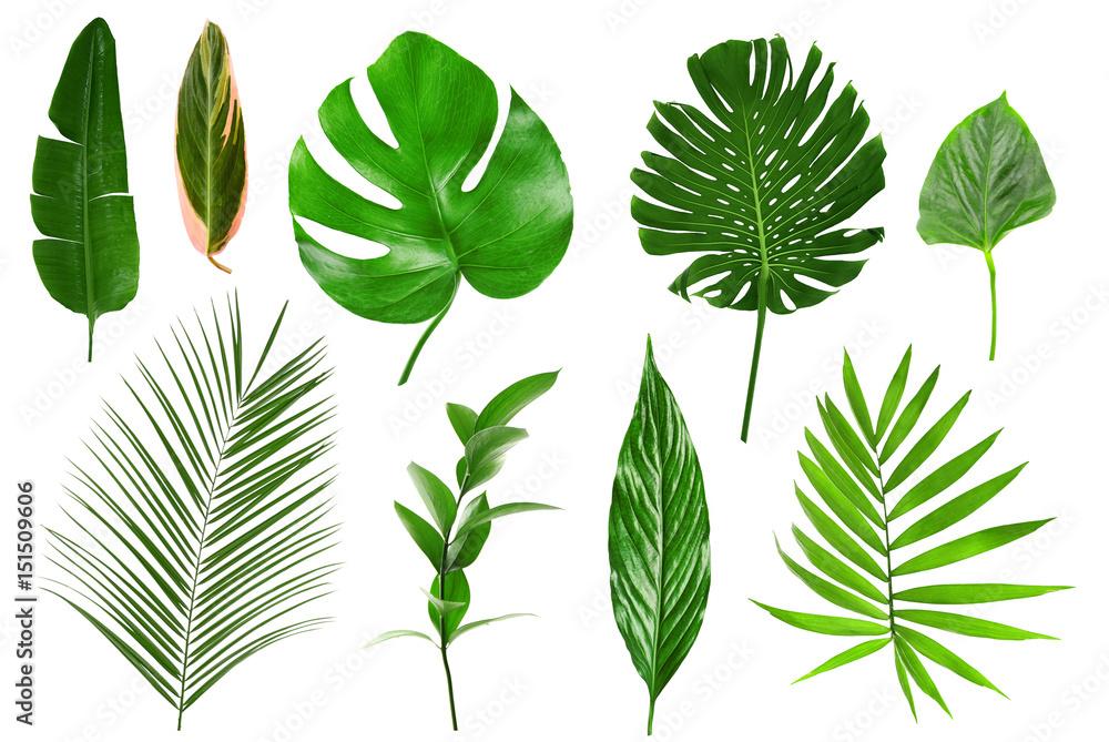 Fototapeta Different tropical leaves on white background