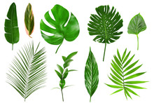 Different Tropical Leaves On W...