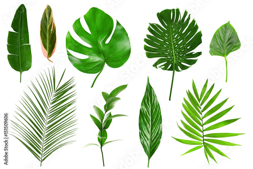 Valokuva  Different tropical leaves on white background
