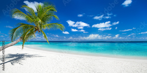 Foto auf Gartenposter Strand coco palm panorama wide format on tropical paradise dream beach