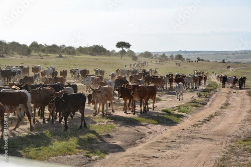 Spoed Foto op Canvas Kenia Safari