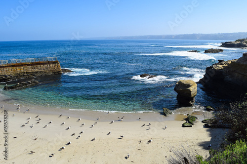 Sun Worshiping Seagulls Align on Children's Beach in La Jolla, California Canvas-taulu