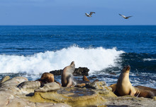 Sea Lions, Crashing Surf And Soaring Pelicans