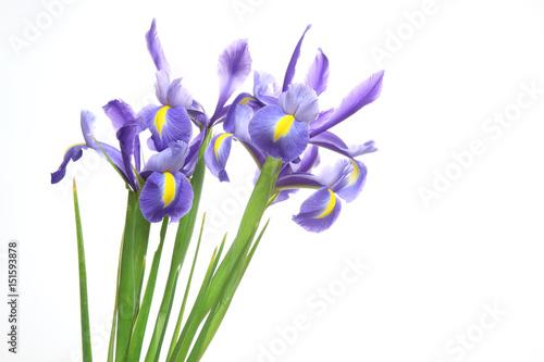 Spoed Foto op Canvas Iris アヤメ