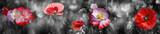 Fototapeta Kwiaty - summer meadow with red poppy