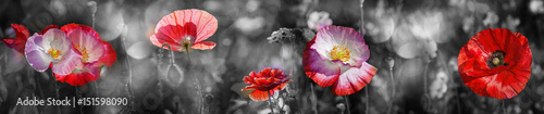 Foto op Canvas Poppy summer meadow with red poppy