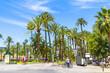 Palma Mallorca famous seaside palm trees promenade Passeig de Sagrera.