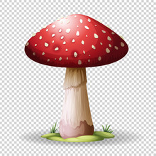 Red Mushroom On Transparent Ba...