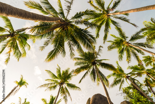 Coconut palm tree warm sun light coast rocky beach