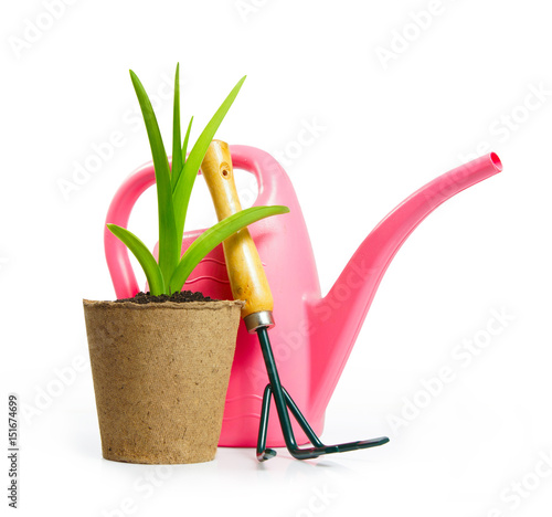 Fototapeta Gardening composition with watering can and green plant in the peat pot isolated on white background obraz