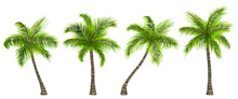Set Realistic Palm Trees Isola...