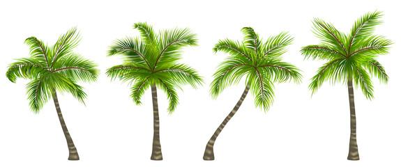 Postavite realistične palme izolirane na bijeloj pozadini