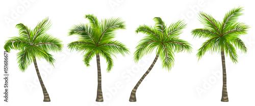 Set Realistic Palm Trees Isolated on White Background Slika na platnu