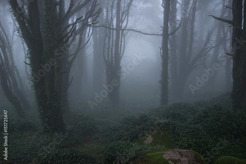 Plakat Tajemniczy ciemny stary las z mgłą w górach Sintra w Portugalii
