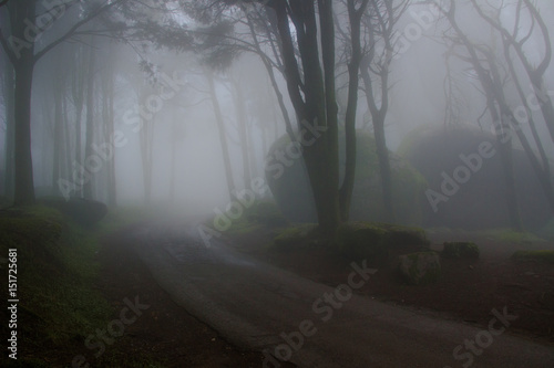 Foto op Aluminium Begraafplaats Mysterious dark old forest with fog in the Sintra mountains in Portugal