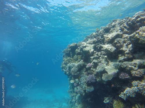 Staande foto Koraalriffen Red sea, egypt, israel, recreation, karall reef, underwater fairy tale, diving, water wealth, fish, nature,