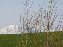 春の牧草地と羊蹄山山...