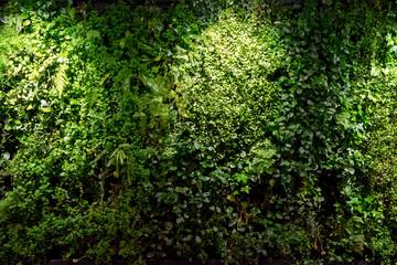 Fototapeta壁面緑化