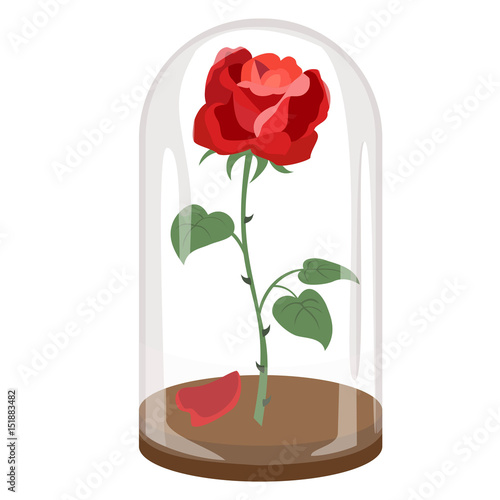 Rose in a flask of glass on the white background. Wall mural