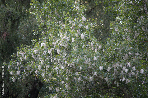 Foto op Canvas Weg in bos allergy, angle, animal markings, blossom, blue, bouquet, branch, bud, clear sky, color image, cottonwood tree, day, fluffy, fur, green color, horizontal, insect, large, leaf, light - natural phenomeno