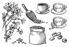 Set Of Cup And Coffee Beans And Branch In Graphic Style Hand-drawn Vector Illustration.