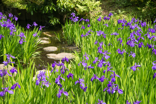 Stone steps in a pond amidst a meadow of irises in a zen garden