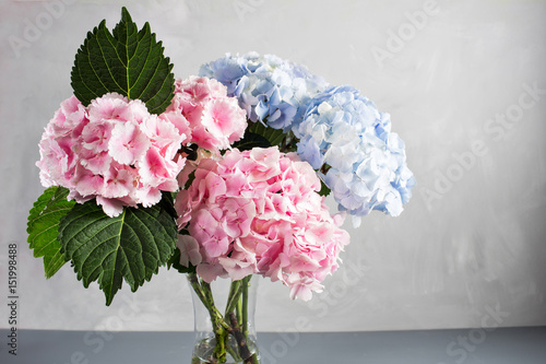 Foto op Plexiglas Hydrangea hydrangeas in a glass vase. Hydrangeas produce larger mopheads made up of clusters of small flowers from Summer through Autumn.