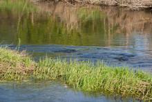 River Grass On A Strong Curren...