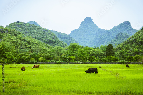 Poster Lime groen Countryside scenery in springtime