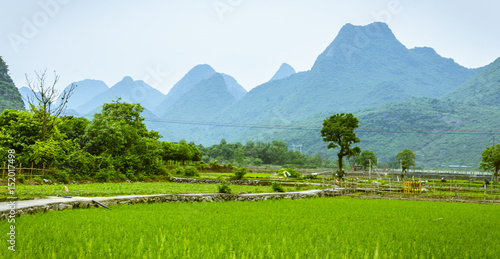 Poster Lime groen Rice fields and mountains background scenery