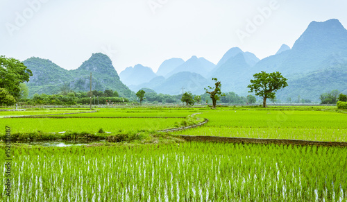 In de dag Lime groen Rice fields and mountains background scenery