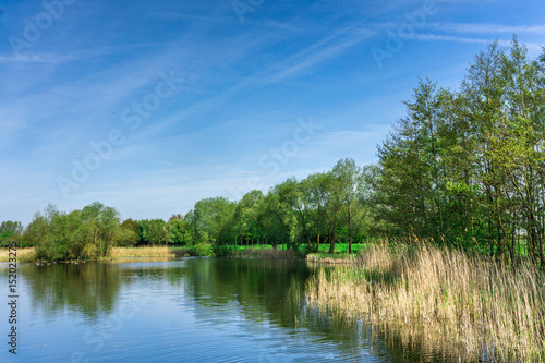 Fotografía  Nature conservation area with trees a small lake at sunshine and blue sky