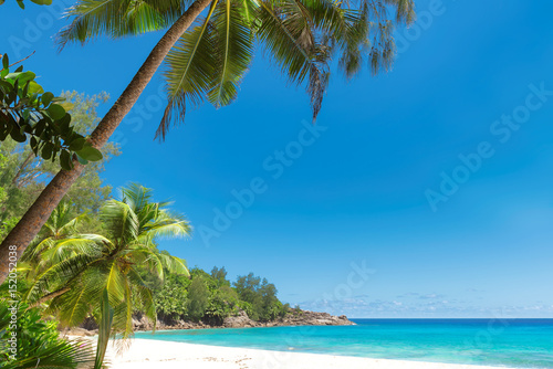 Poster de jardin Caraibes Palms on Caribbean beach.