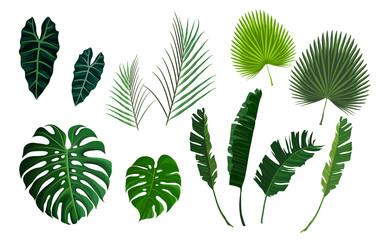 Vector tropsko lišće palme, lišće džungle postavljeno