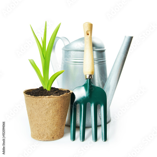 Fototapeta Gardening composition with green plant in the peat pot and garden tools isolated on white background obraz
