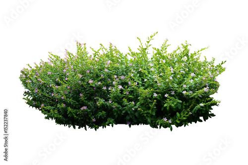 flower bush tree isolated with clipping path Fototapet