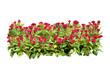 Leinwandbild Motiv flower bush tree isolated with clipping path
