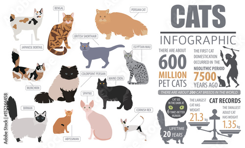 Fotografie, Obraz  Cat breeds infographic template, icon isolated on white