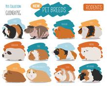 Guinea Pig Breeds Icon Set Fla...