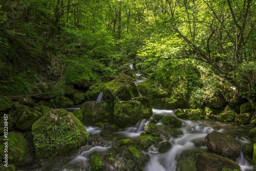 Poster Rivière de la forêt River in the mountains of Bulgaria