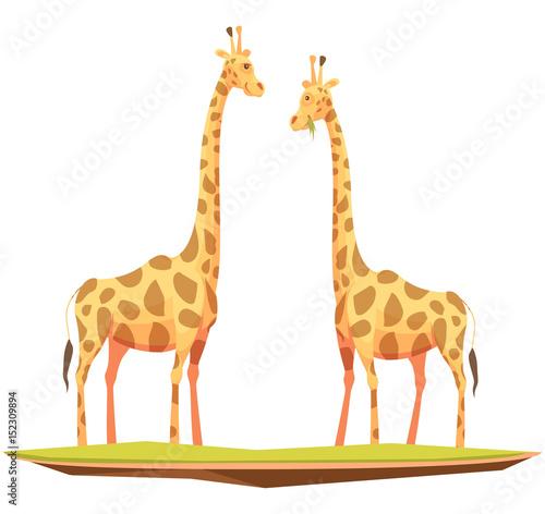Photo Giraffes Couple Animals Composition