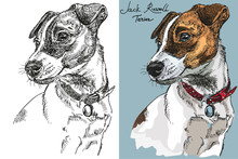 Vector Jack Russel Terrier In Color And Black And White