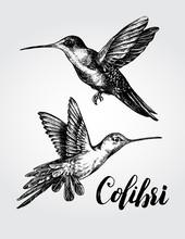 Two Flying Colibri Birds. Hand Drawn Vector Illustration.