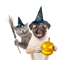 Cat And Dog In Hats For Halloween With Witches Broom Stick And Pumpkin. Isolated On White Background